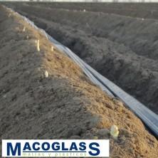 ACOLCHADO G 300 CON BOLSILLO PARA ESPARRAGOS 1,4X380 M